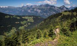 Abfahrt von der Alp Gamidaur