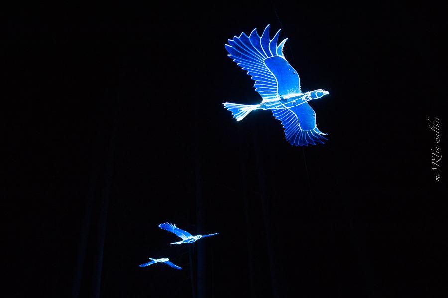 Leuchtmilan, Zauberwald