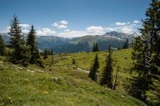 Saaser Alp, Madrisa, Klosters