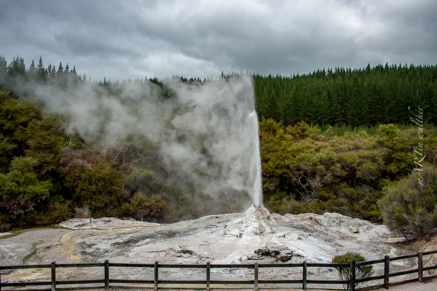 Lady Knox Geyser, Norsinsel, Neuseeland, New Zealand,Wai-O-Tapu Thermal Wonderland