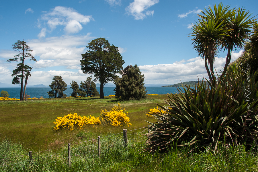 Norsinsel, Neuseeland, New Zealand,Lake Taupo