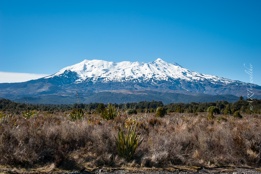 Norsinsel, Neuseeland, New Zealand,Mount Ruapehu,Tongariro N.P.