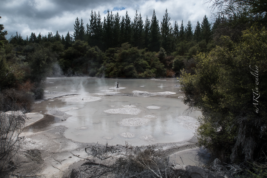 Mud Pool, Norsinsel, Neuseeland, New Zealand,Wai-O-Tapu Thermal Wonderland