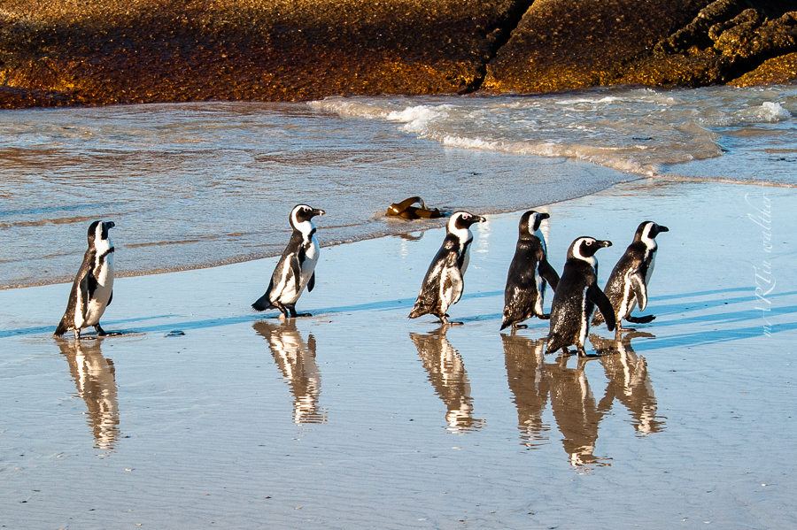 South Africa, Boulders Beach