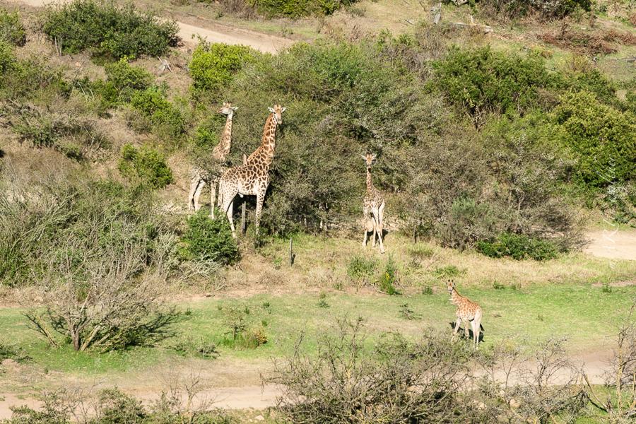 South Africa, Botlierskop