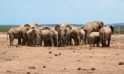Sout Africa, Addo Elephant Park