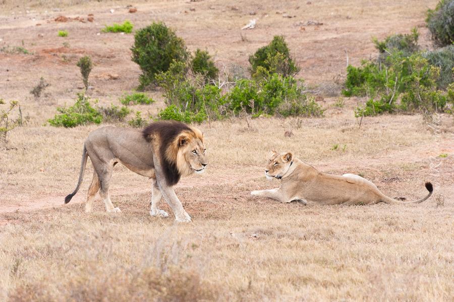 South Africa, Addo Elephant Park