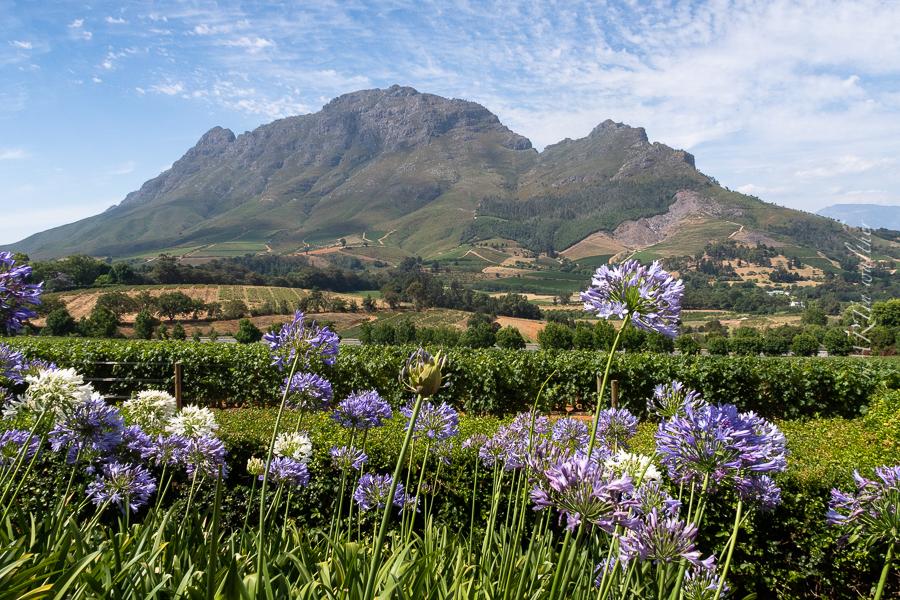 South Africa, Stellenbosch